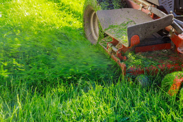 mulching grass on lawn with gas push mower