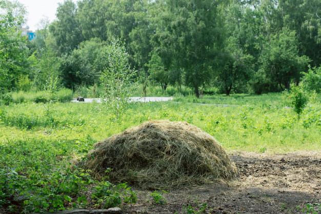 lawn grass waste in yard